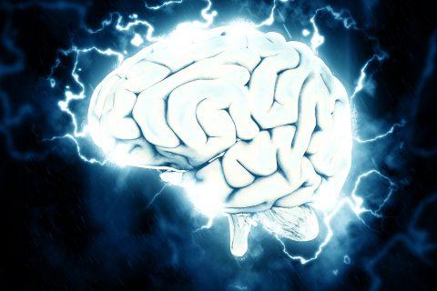 l'aptitude d'anticiper au coeur du cerveau